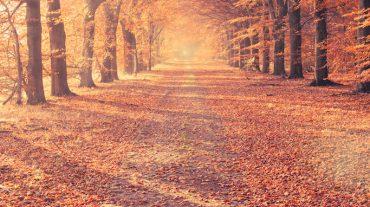 Seasonal Sales Cash Flow Strategies
